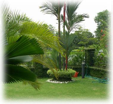 Proyectos, realización y mantenimiento de:: servicios de Plante Verde