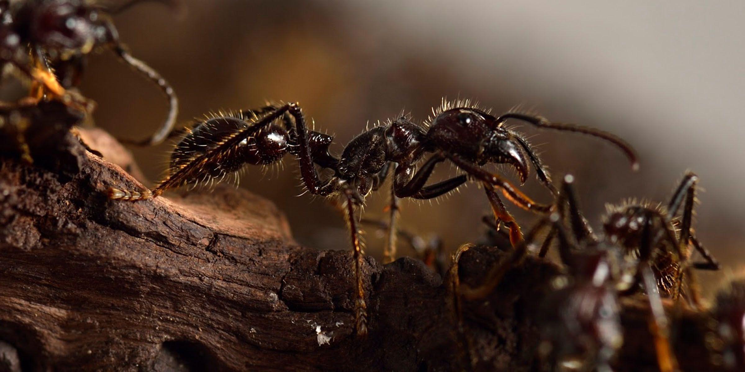 Tratamiento de termitas