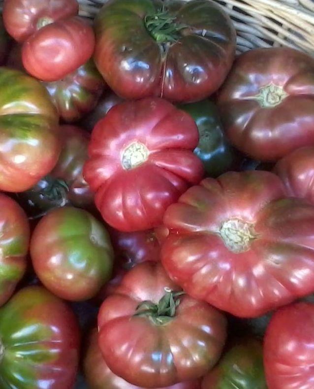 Tomates Morunos