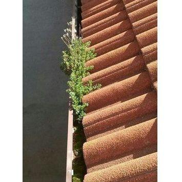 Limpieza y reparación: Productos y servicios de Canalón Cleaners