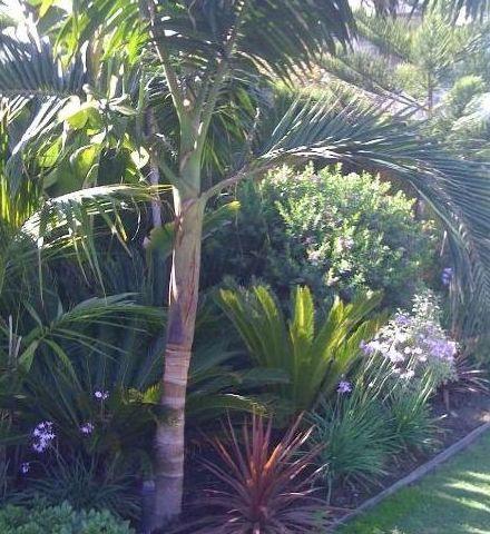 Mantenimiento de jardines servicios de fertoro for Mantenimiento de jardines