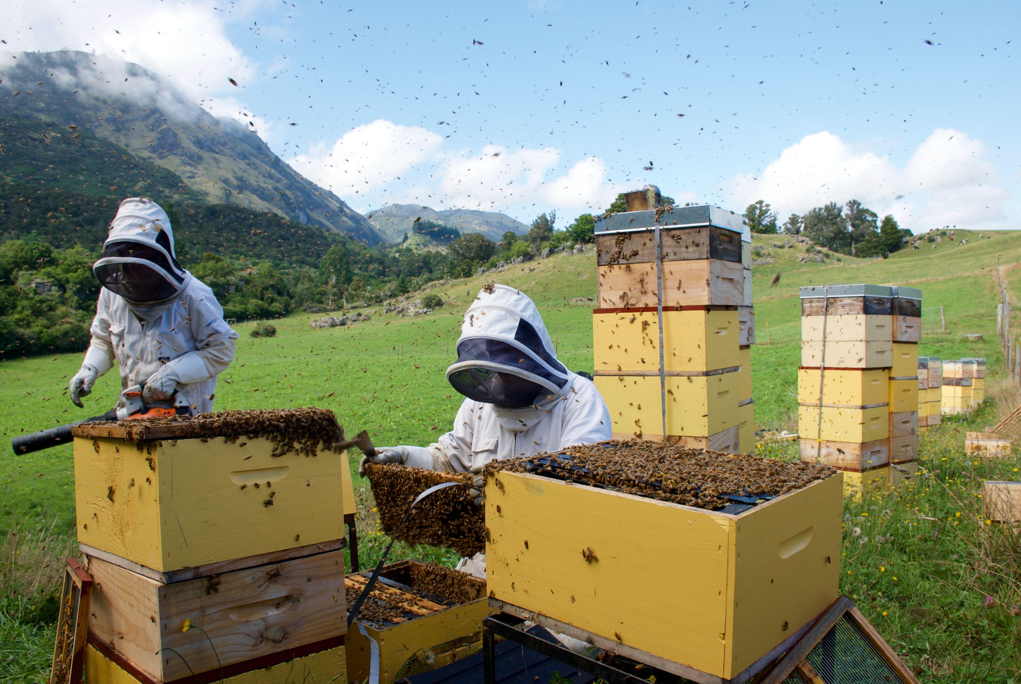 Miel de abejas Cáceres