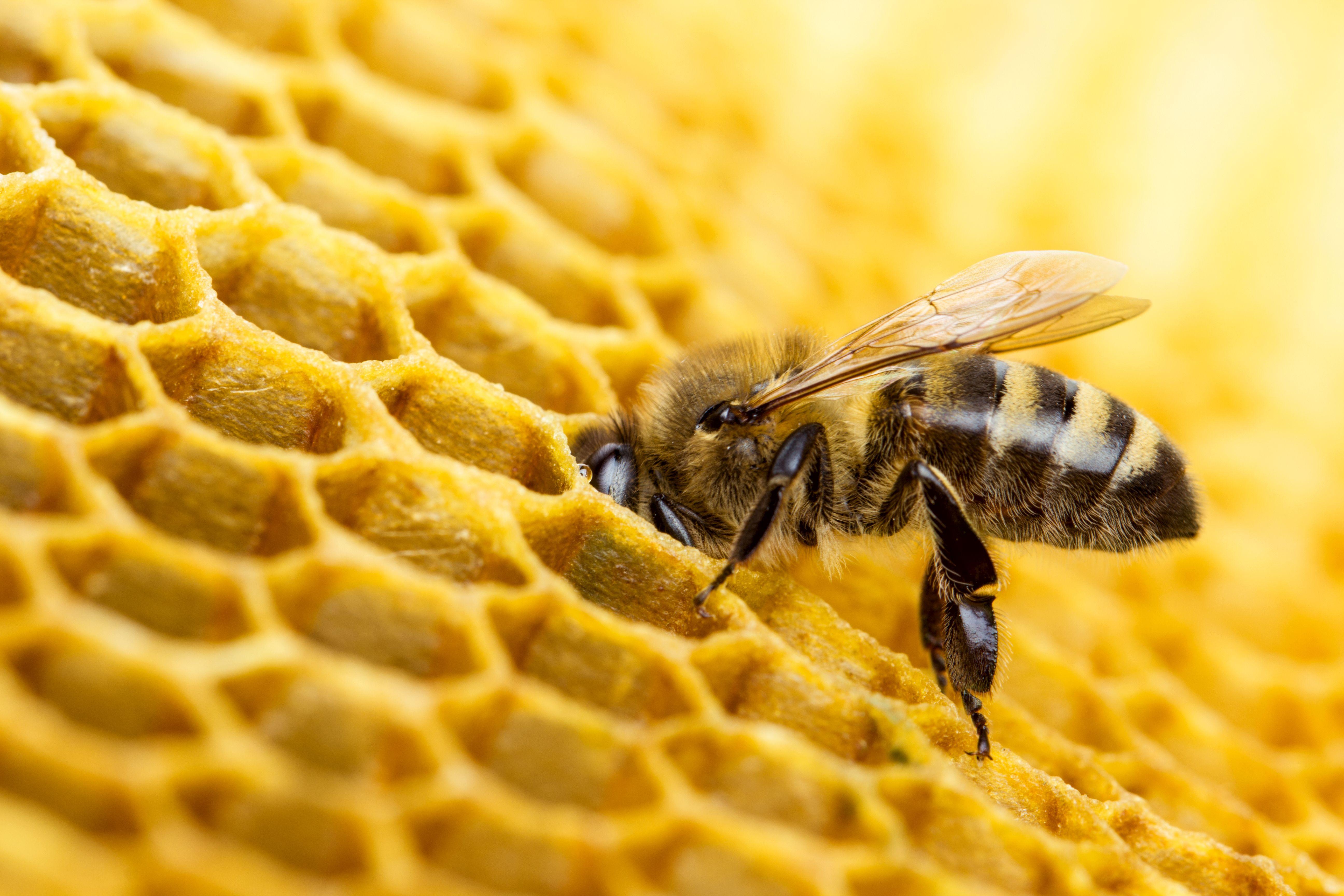 Cera de abeja de primera calidad