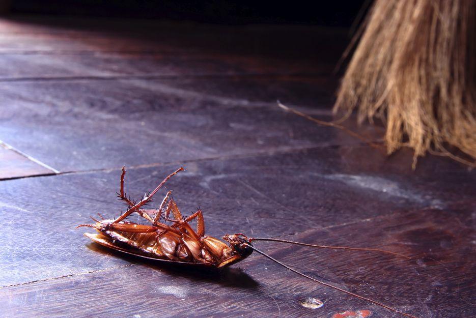 Control de plagas de cucarachas en Bilbao