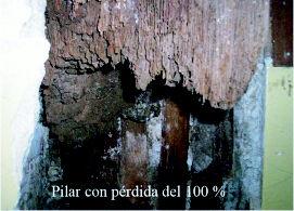 Foto 27 de Tratamiento de maderas en Getxo | Abando Desinfecciones