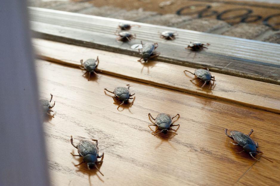 Control de plagas de insectos en Bilbao