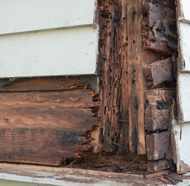 Tratamientos para eliminar termitas en Bilbao