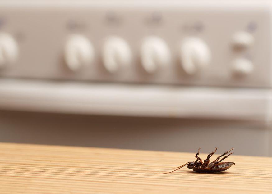 Empresa especializada en el control de plagas de cucarachas en Bilbao