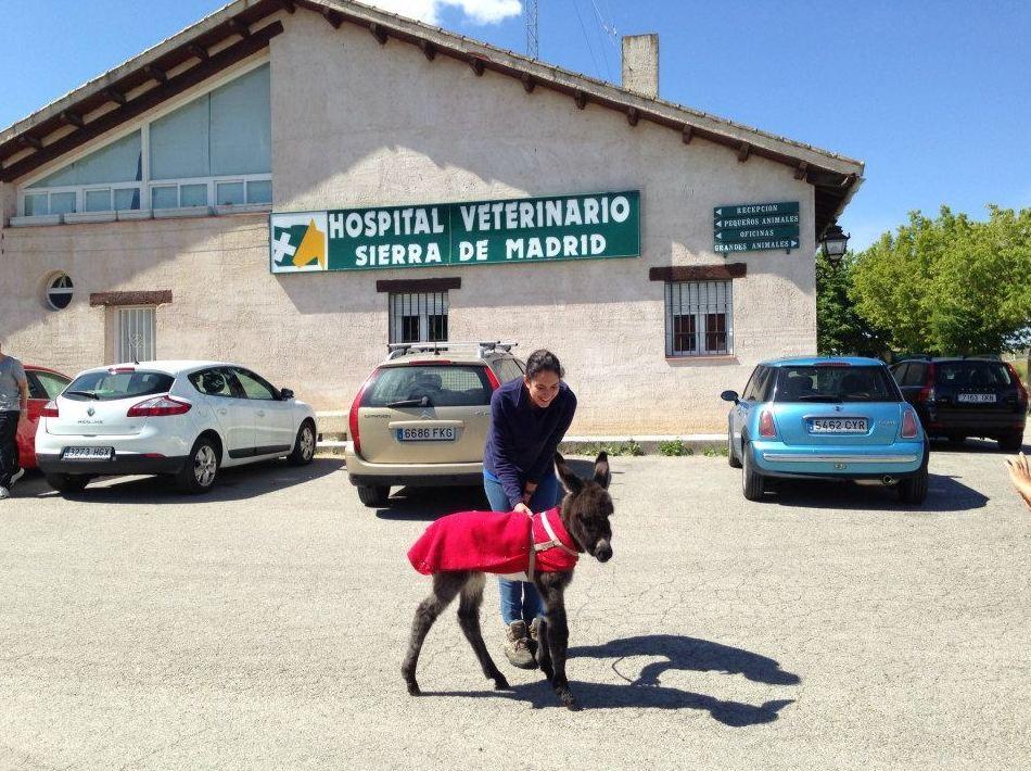 Foto 12 de Veterinarios en San Agustín del Guadalix | Hospital Veterinario Sierra de Madrid