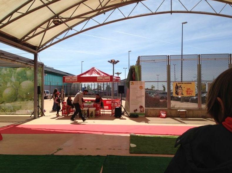 Exhibicion de VERDECORA con adiestramiento del HVSM en San Agustín del Guadalix - Madrid