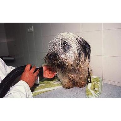 Peluquería canina : Servicios  de Hospital Veterinario Sierra de Madrid
