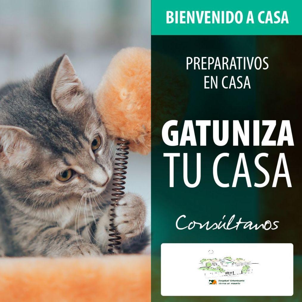 Foto 6 de Veterinarios en San Agustín del Guadalix | Hospital Veterinario Sierra de Madrid