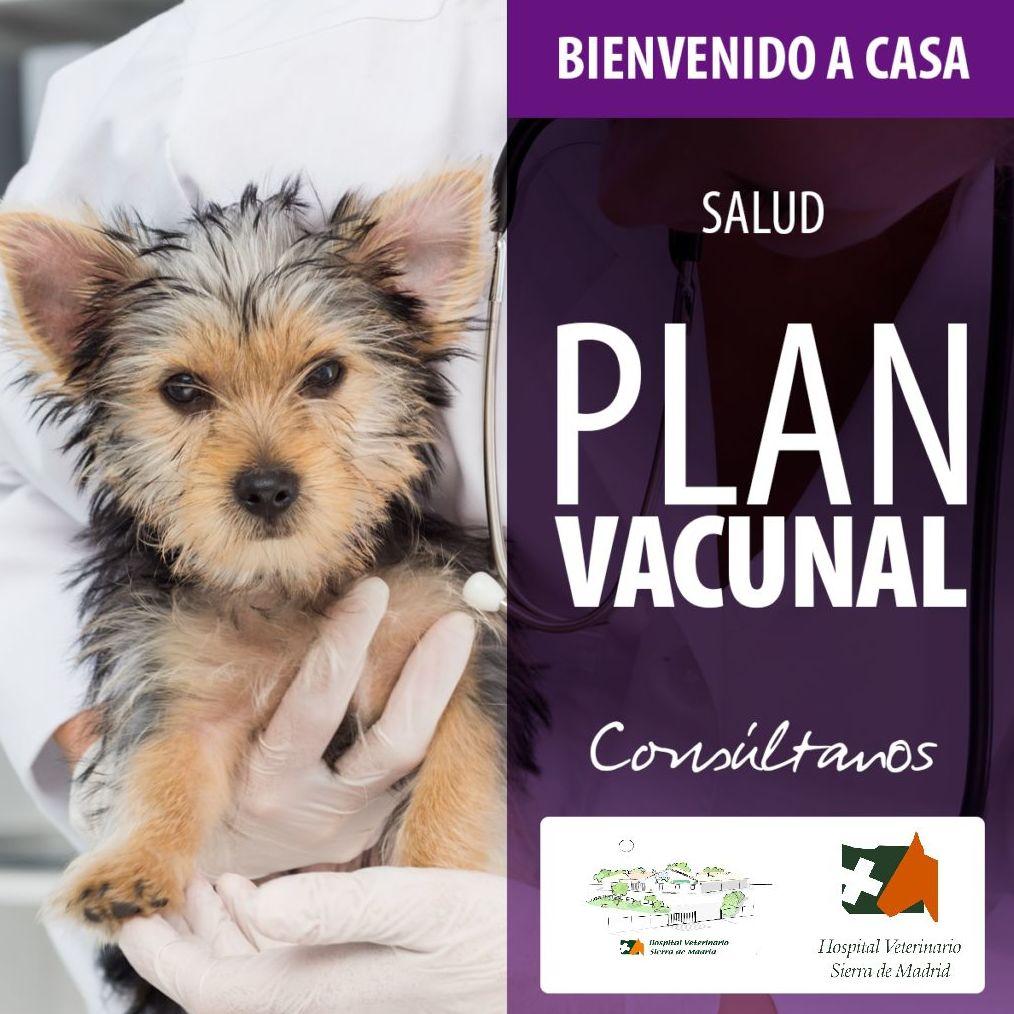 Foto 5 de Veterinarios en San Agustín del Guadalix | Hospital Veterinario Sierra de Madrid