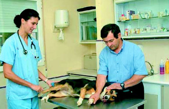 clinica veterinaria en San Agustín del Guadalix - Madrid