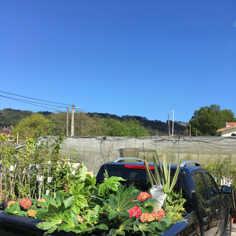 Todo tipo de plantas para interior y exterior