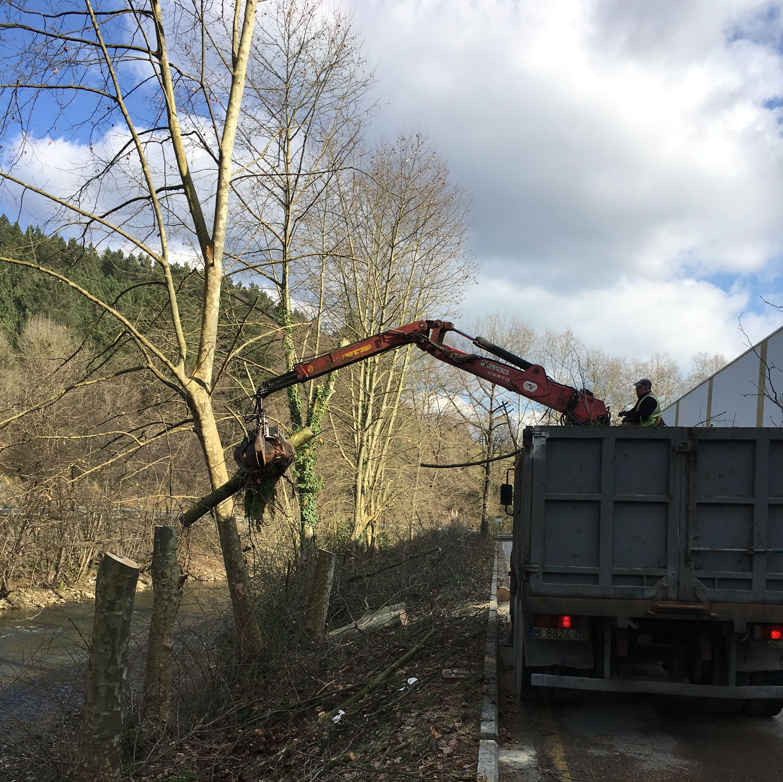 Retirada de poda en Bilbao