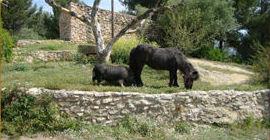Animales de granja - Elvis y Panda