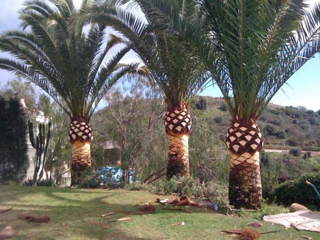Mantenimiento de palmeras