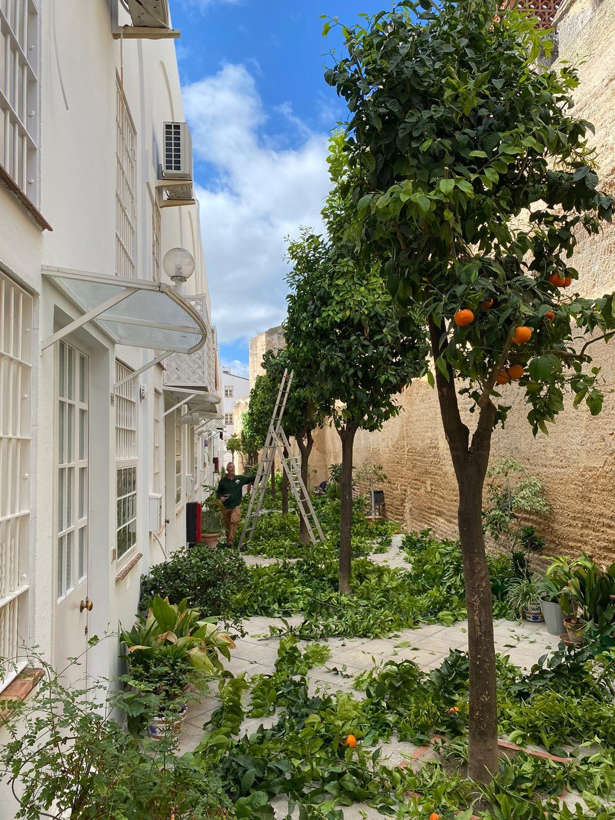 Foto 18 de Mantenimiento de jardines en  | Indigo Jardines