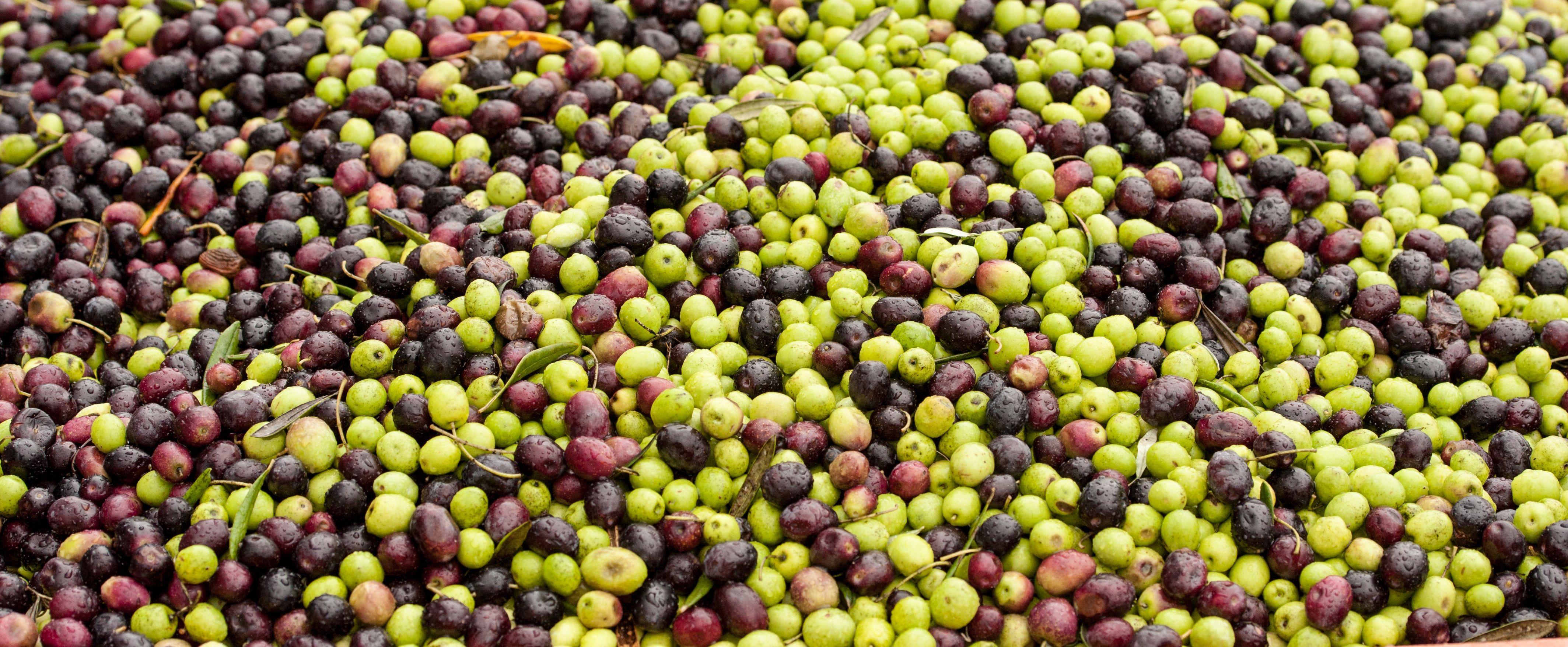 Productores de aceite en Jaén