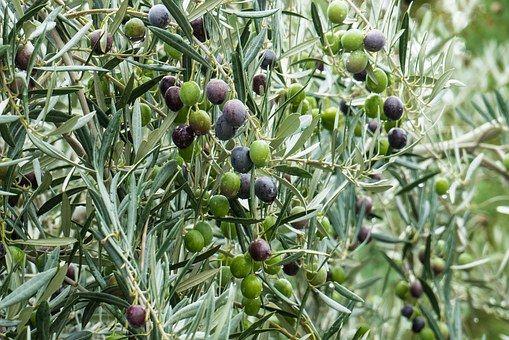 Foto 40 de Aceite de oliva en  | Aceites del Sur
