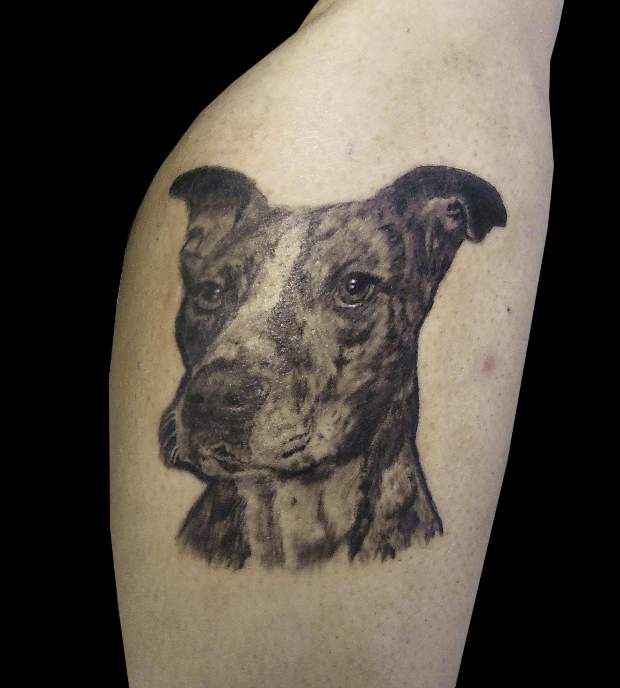 Perro realismo en pierna en Chus Tattoo de Logroño