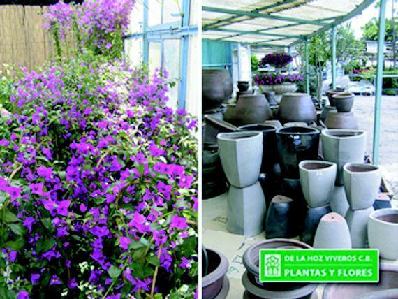 Donde puedes instalar tus plantas