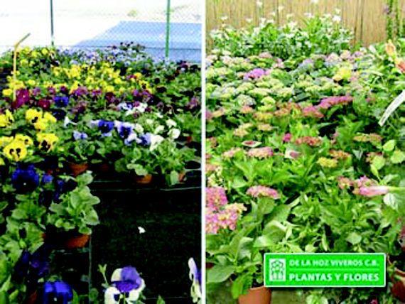 Te asesoramos en tus plantas y flores