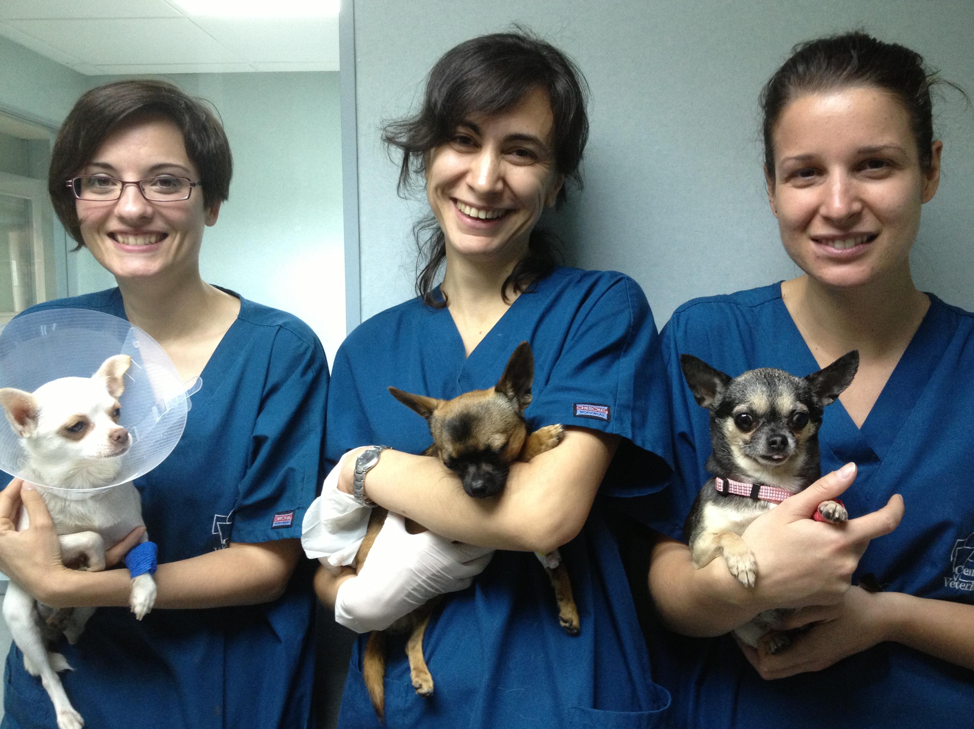 La mañana del Chihuahua: LINDA, LUCKY Y TIFFANY