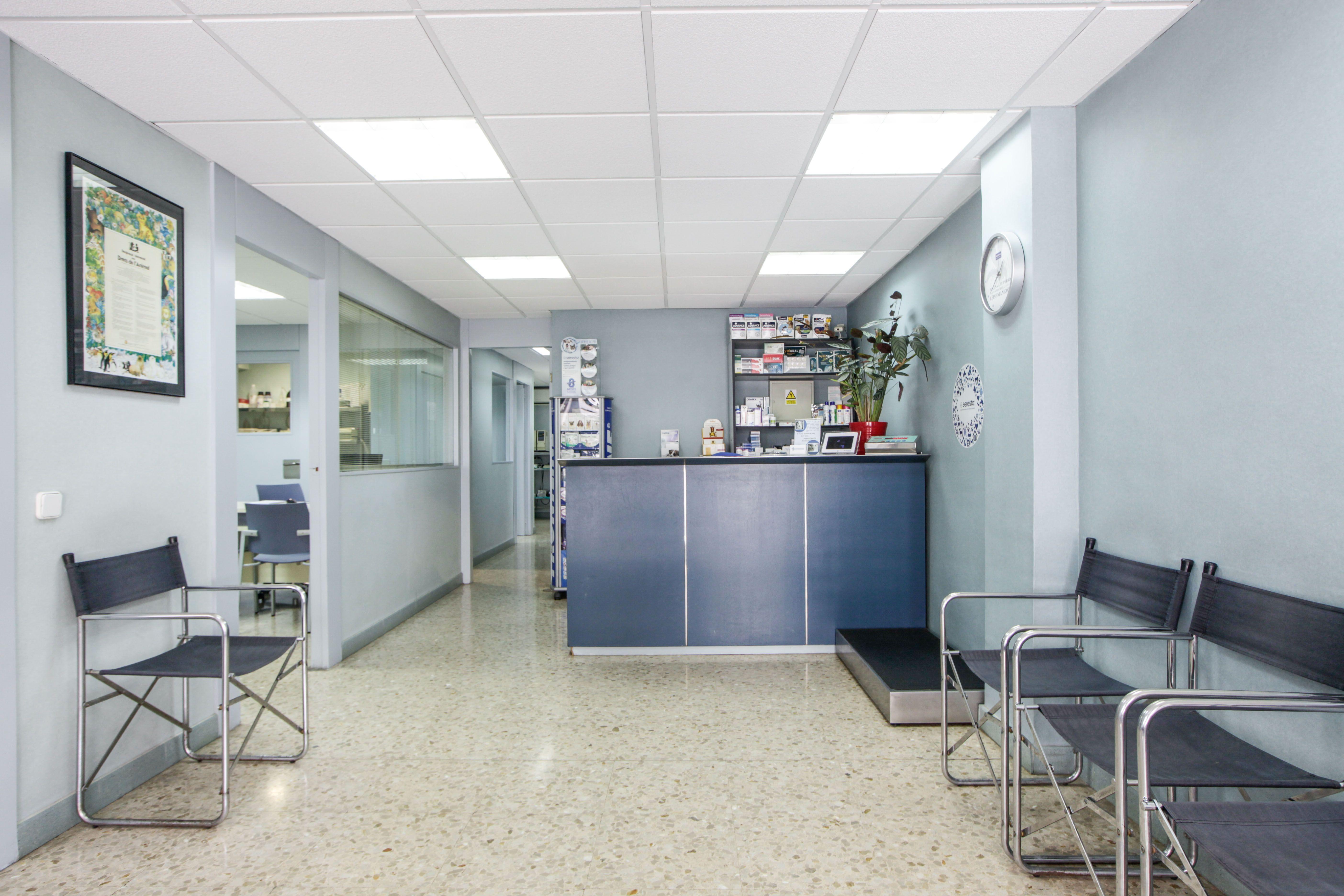 Foto 3 de Veterinarios en Sant Feliu de Llobregat   Centre Veterinari Lacueva Rodrigo