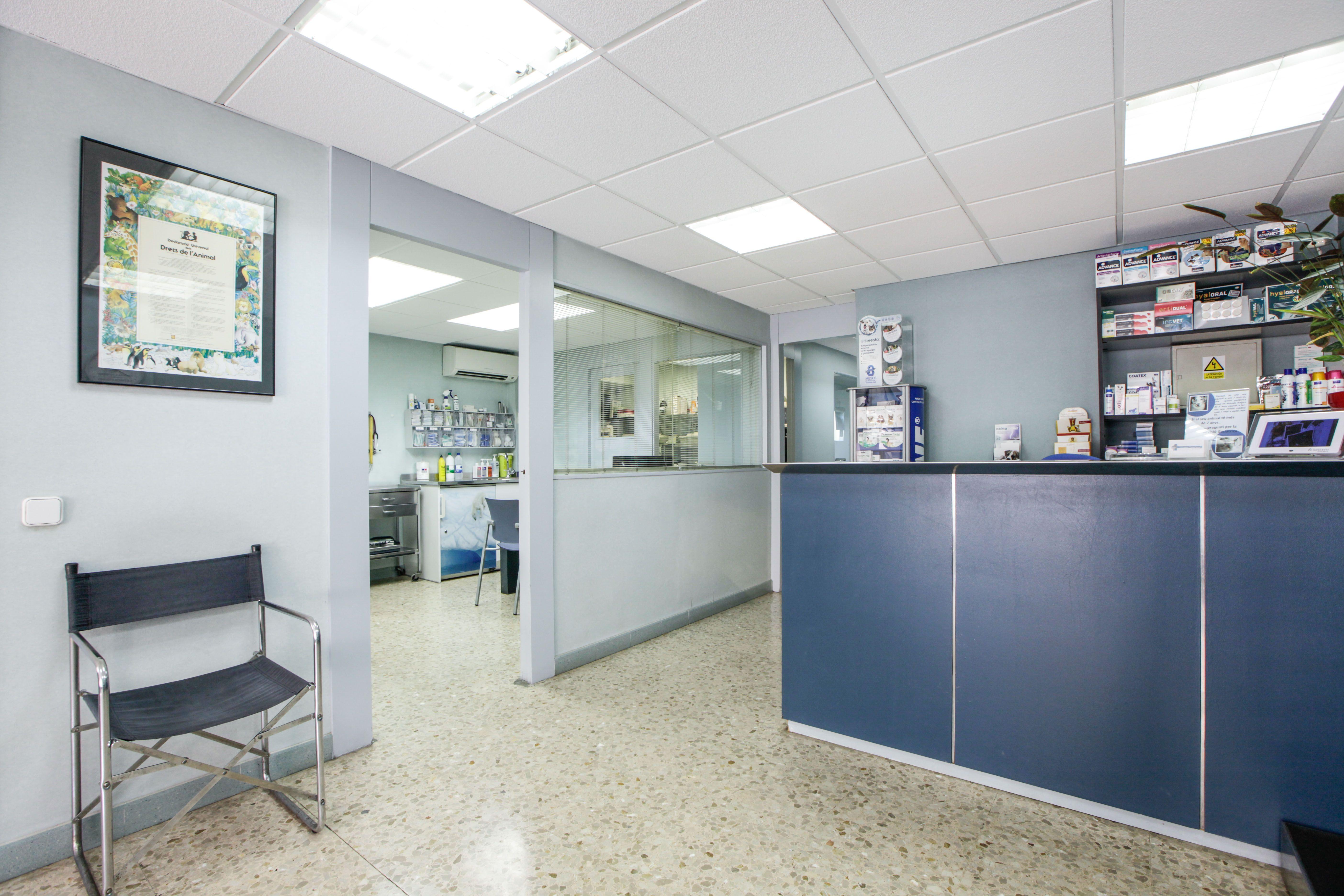 Foto 1 de Veterinarios en Sant Feliu de Llobregat | Centre Veterinari Lacueva Rodrigo