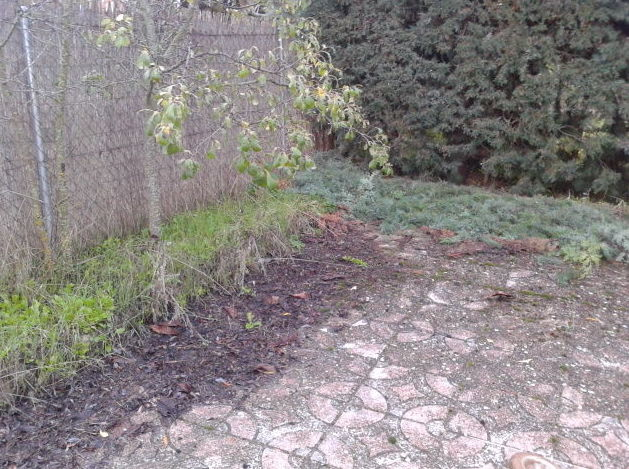arreglar jardin abandonado idea de la imagen de inicio