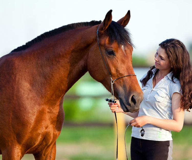Terapia con caballos en Málaga