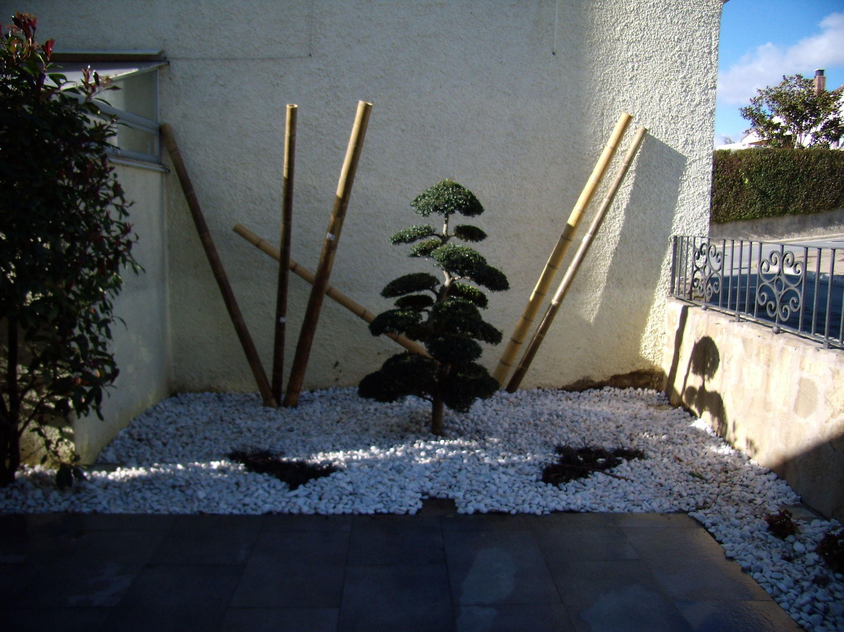macrobonsai con cañas de bambú