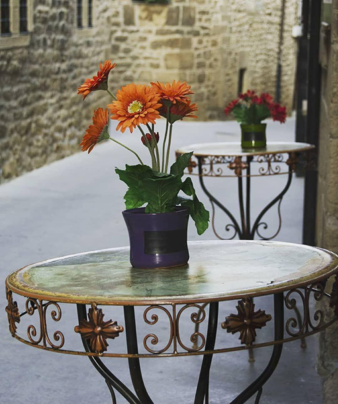 Venta de plantas decorativas en Navarra