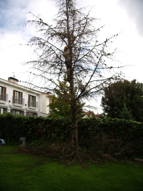 Foto 39 de Jardinería en  | Jardinería Belardi, S.L.