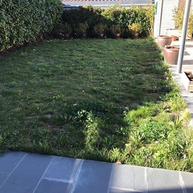 Mantenimiento de jardines en Navarra