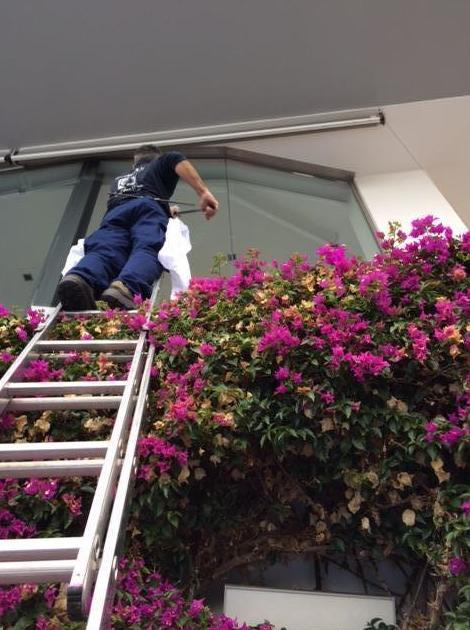 Foto 13 de Servicios de limpieza y mantenimiento en Barcelona en Gavà | Eosnet