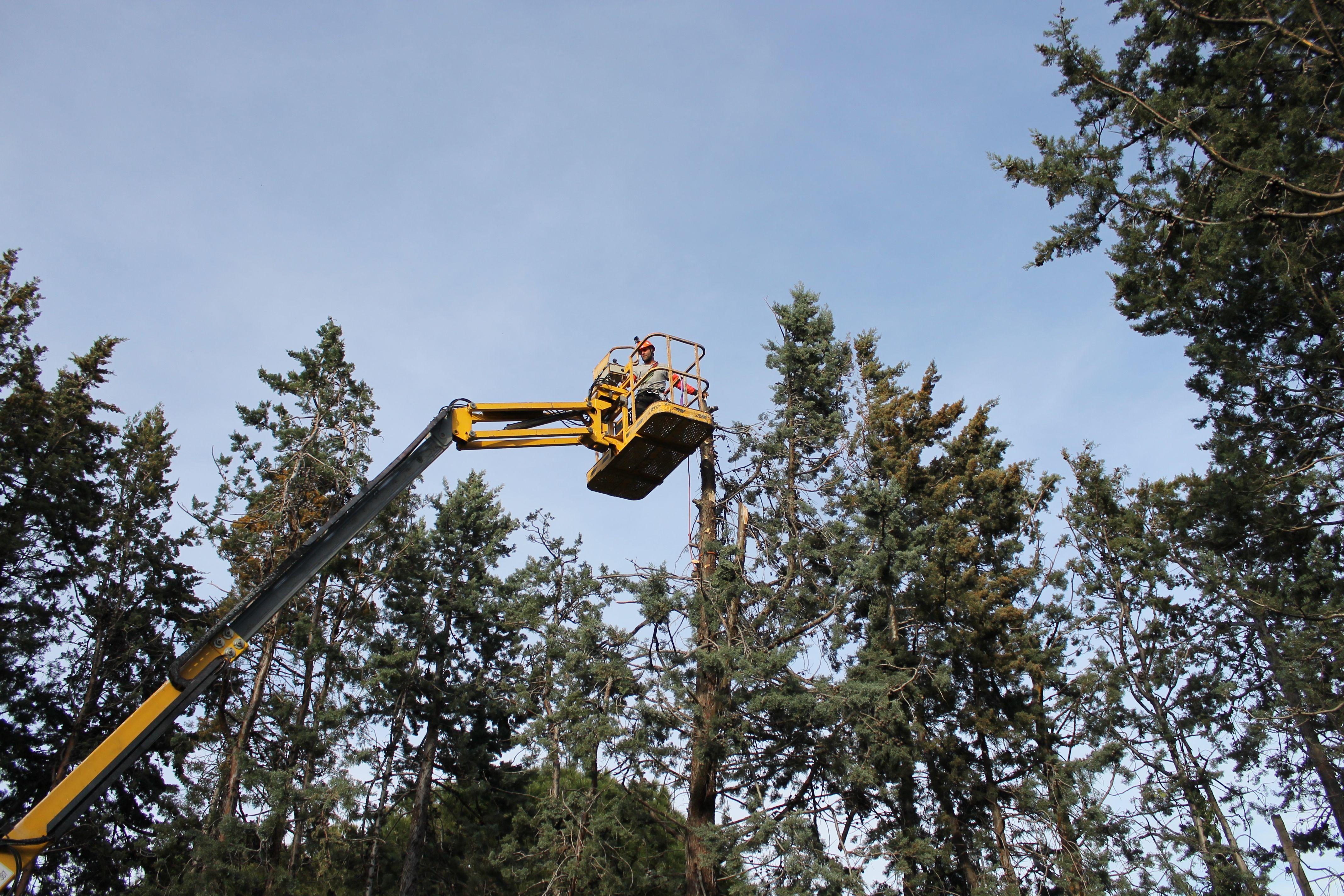 Poda y mantenimiento forestal en Torrelodones