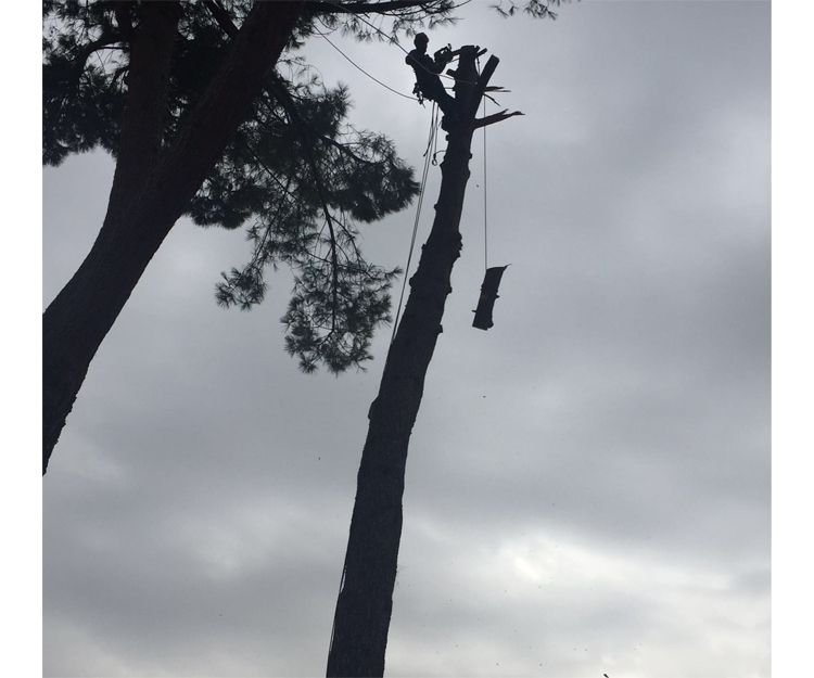 Trabajos de poda en Torrelodones
