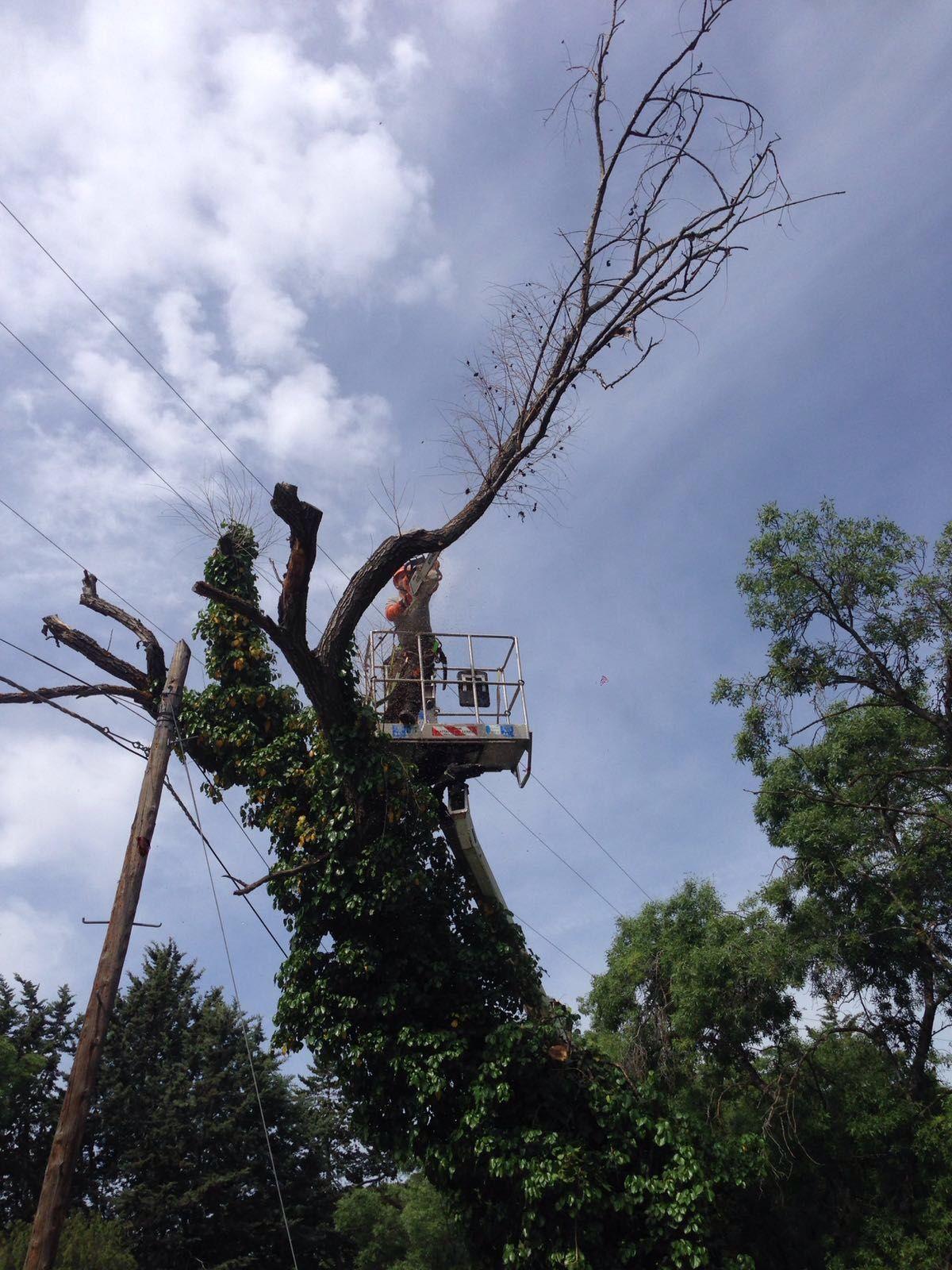 Poda de árboles en Torrelodones