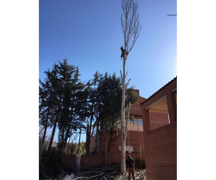Tala y poda de árboles realizadas por especialistas en Torrelodones