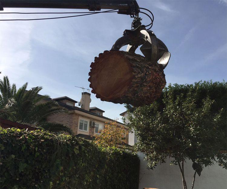 Tala de árboles en Torrelodones