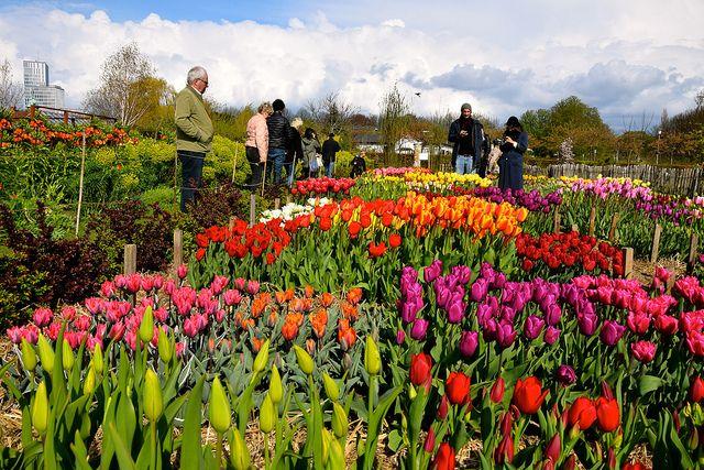 Poda y tala en torrelodones el trabajo de un dise ador de jardines - Disenador de jardines ...