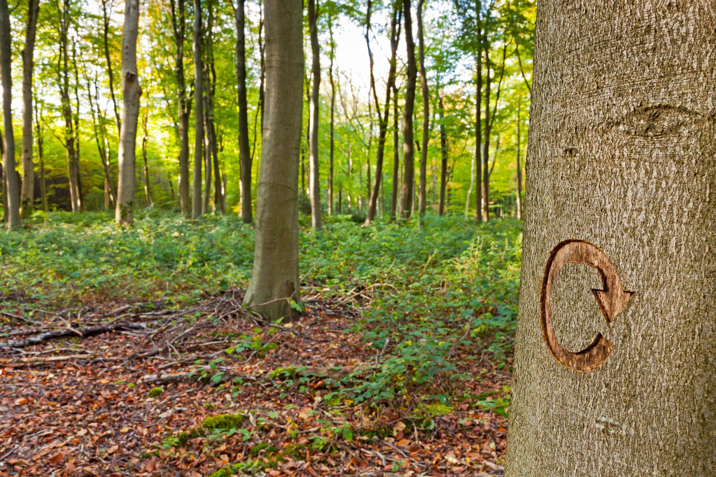 Señalización forestal en Torrelodones
