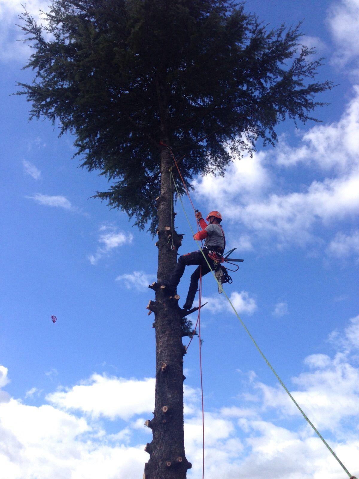 Tala de árbol en altura en Torrelodones