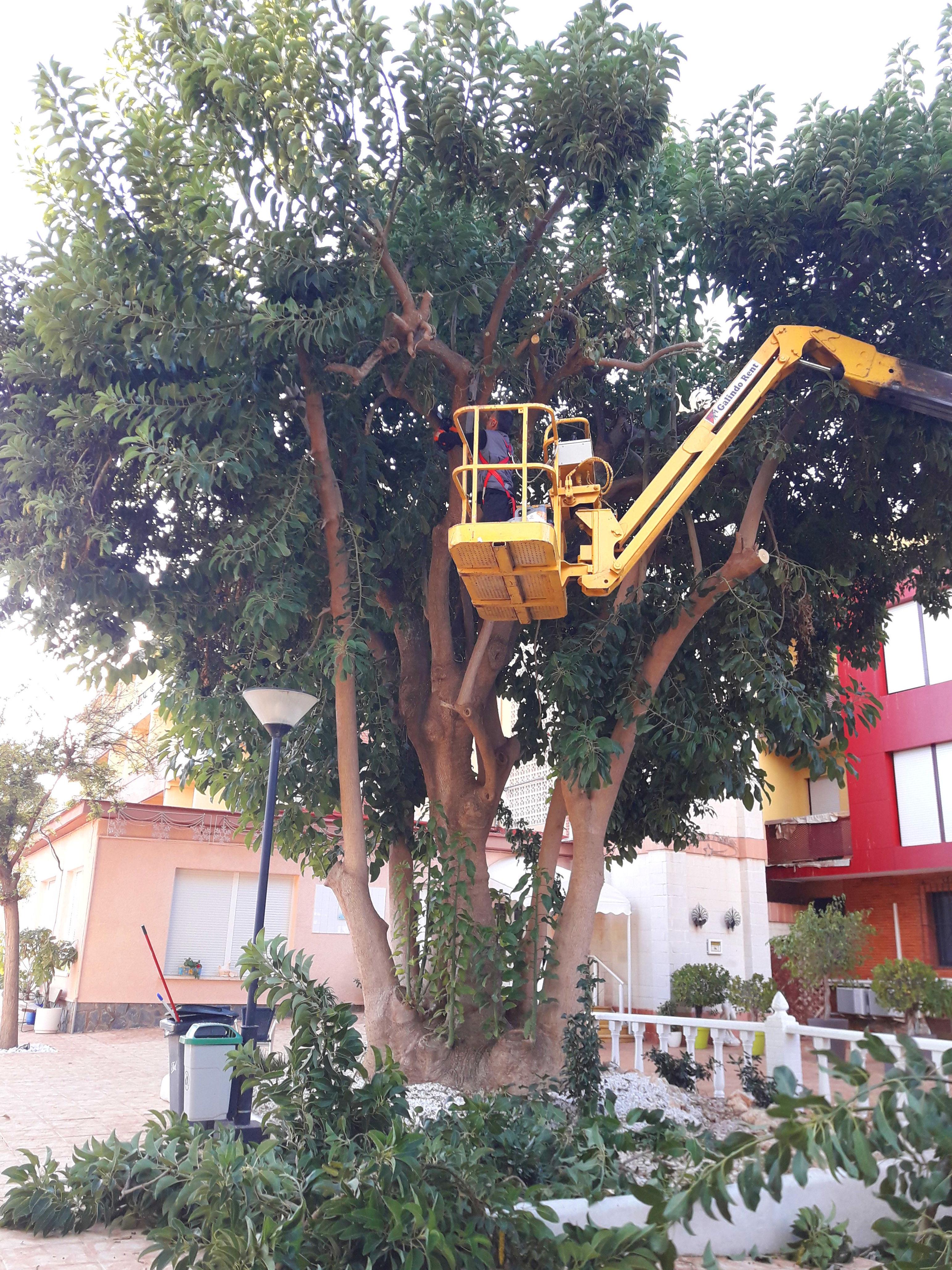 Foto 29 de Jardinería y mantenimiento en Santomera | Mantenimiento Aspi