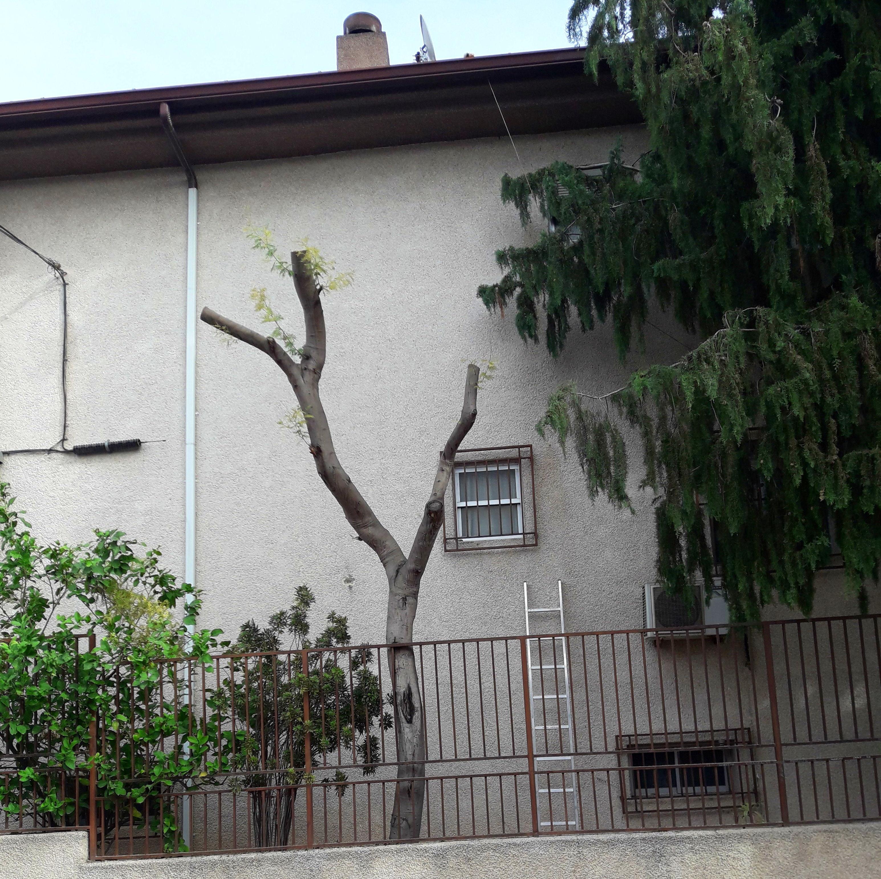 Poda de árbol en Molina del Segura