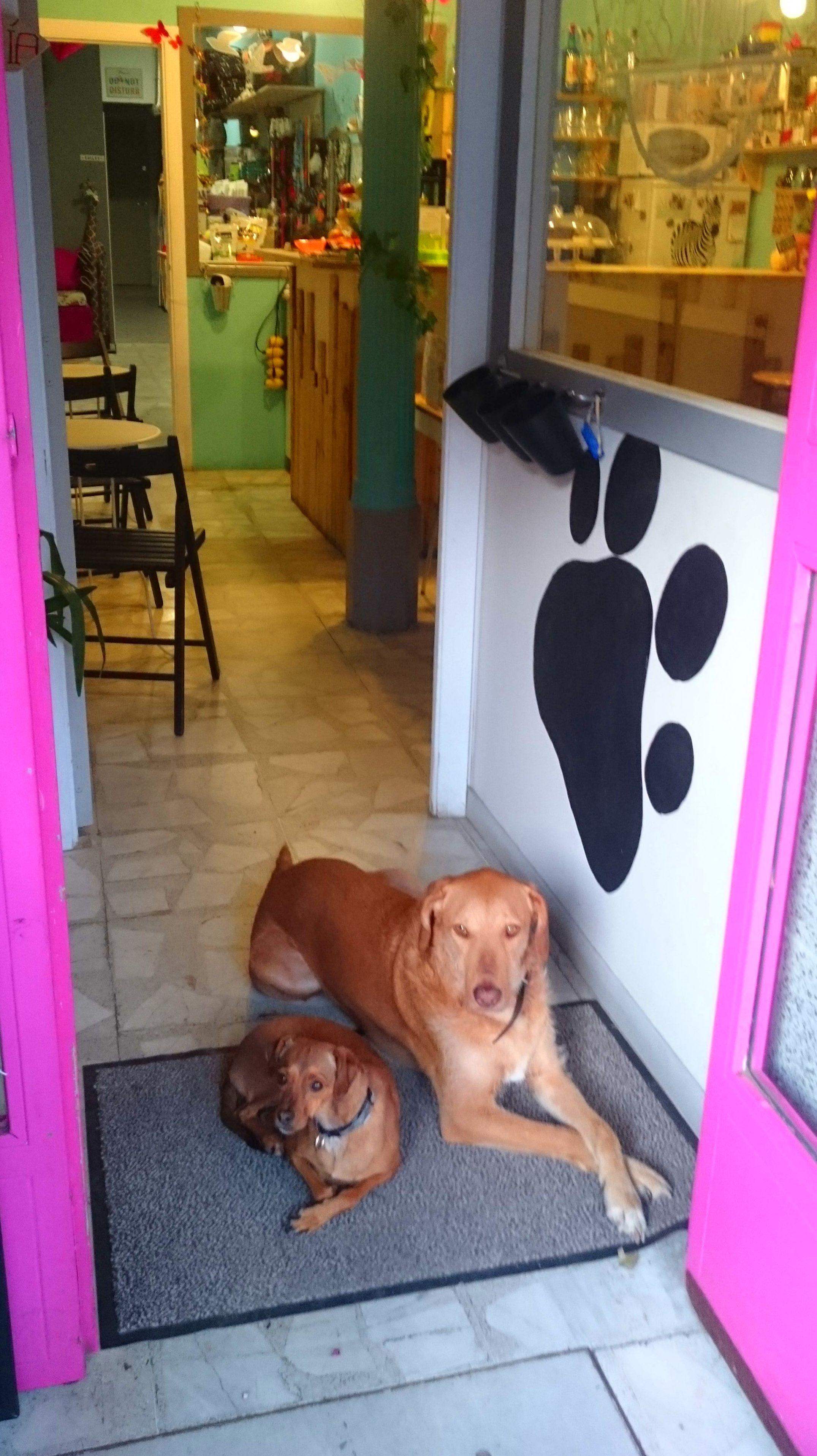 Foto 11 de Tienda de animales en Madrid | Animal&TÉ