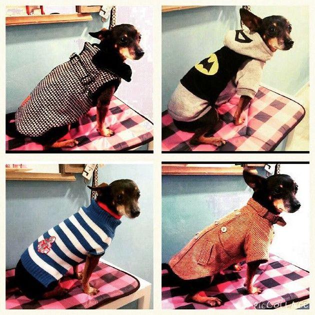 Moda canina, la latina. Madrid. Animal&TÉ